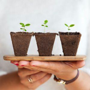 rośliny do ogródka